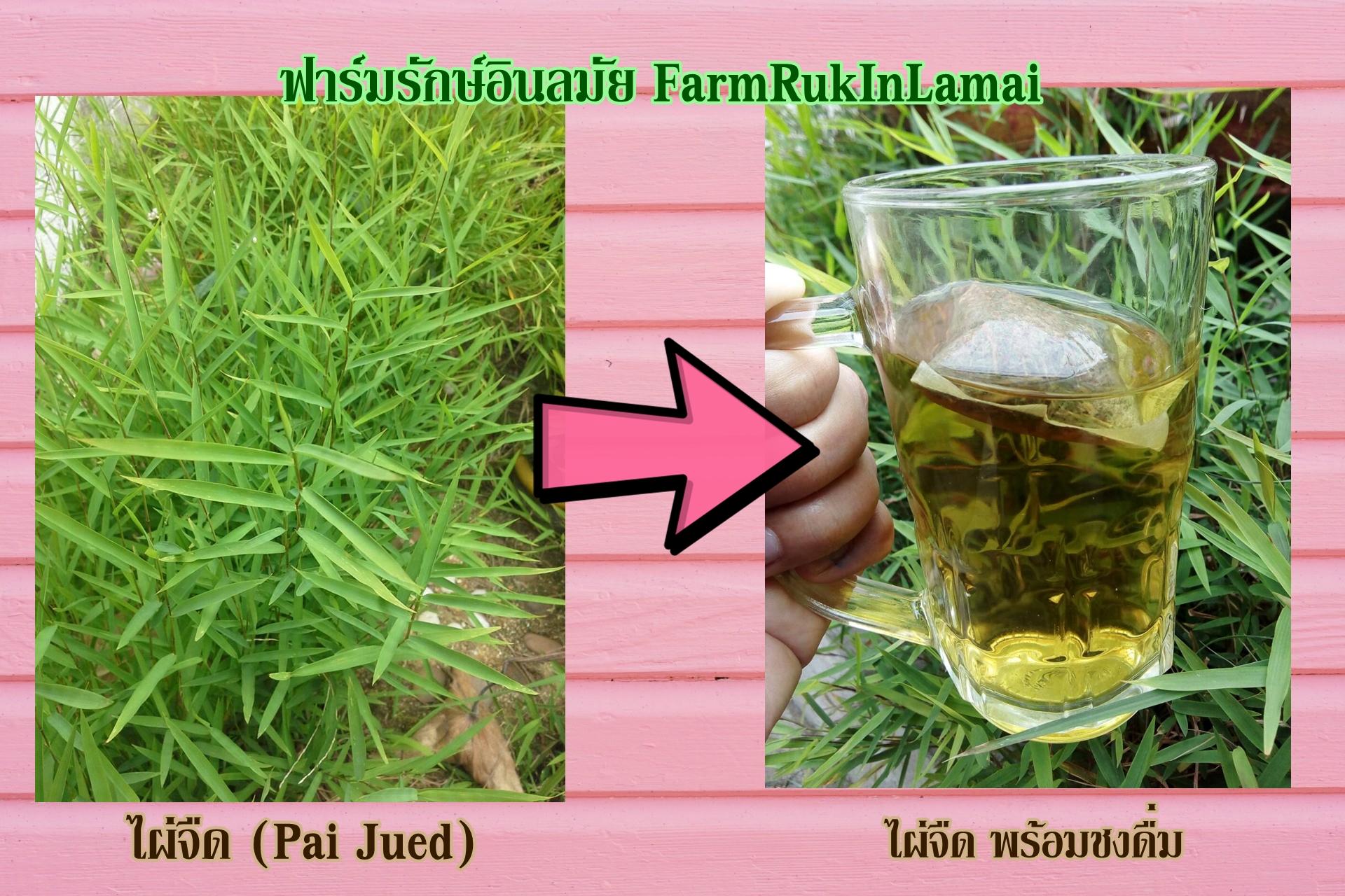 ไผ่จืด ชนิดชงดื่ม (Pai-jued)