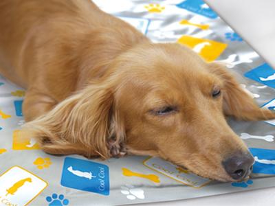 แผ่นที่นอนเจลเย็นสุนัขและแมว Cooling mat for pets