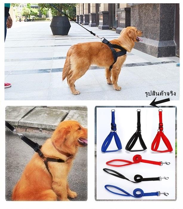 ชุดสายจูงพร้อมที่รัดอก สำหรับสุนัขไซส์ใหญ่ (ส่งฟรี)